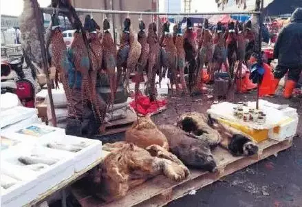 slaughterd peacocks